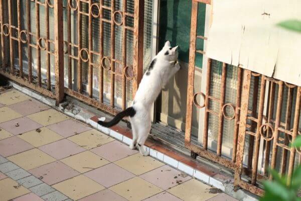 盗みをする猫
